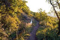 Irrigation canal trail, Capitol Peak trailhead.<br /> <br /> Canon EOS 5D Mk II, 50mm f/1.8 lens