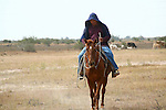 HORSEBACK RIDER at WORK (2)