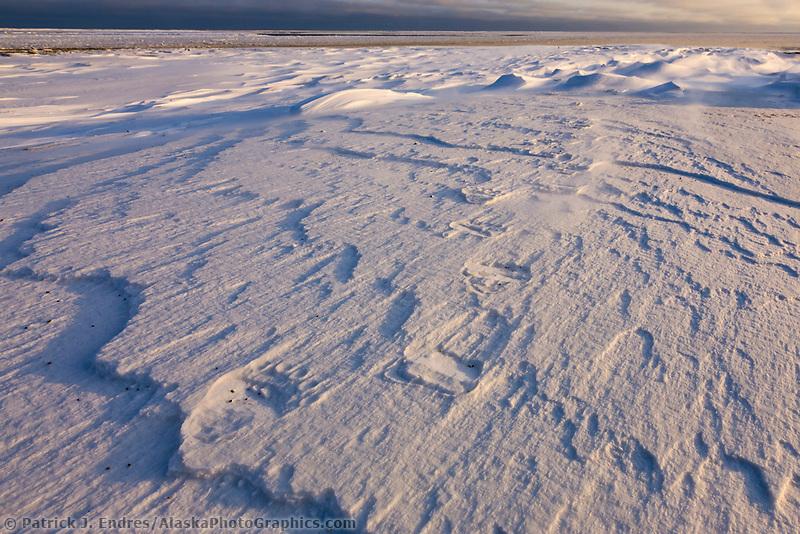Polar bear tracks in the snow on Barter Island, Beaufort sea in the distance, arctic, Alaska