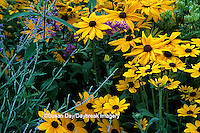 63821-08518 Indian Summer Black-eyed Susan, Russian Sage & Butterfly Bush   Marion Co.  IL