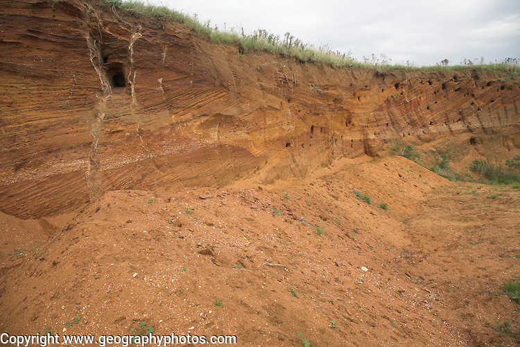 Red crag rock deposits with shells and cross bedding exposed at a quarry, Buckanay Pit, near Alderton, Suffolk, England