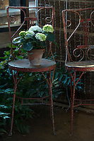 A potted green Hydrangea on an antique wire chair