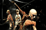 An installation at the opening of the controversial Body Worlds exhibition of human anatomy at Haifa's MadaTech, April 6, 2009. The German exhibition of preserved cadavers in various poses meant to explain the intricacies of the human body and the differences between healthy and unhealthy organs, has drawn the ire rabbis and Israel's religious public who say it is disrespectful of the dead. Members of Israel's Zaka, a service staffed by Orthodox Jews known for collecting the body parts of people killed in terror attacks showed up for the opening. Those exhibited donated their corpses to science. Photo by: Moran Mayan/JINI