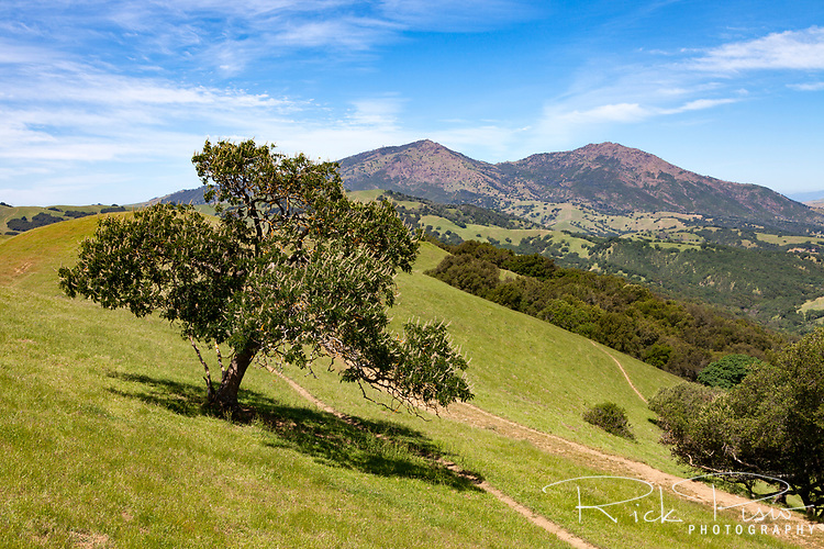 Rolling hillsides of Morgan Territory Regional Preserve , an East Bay Regional Park located in California's Contra Costa County, and the peak of Mount Diablo.