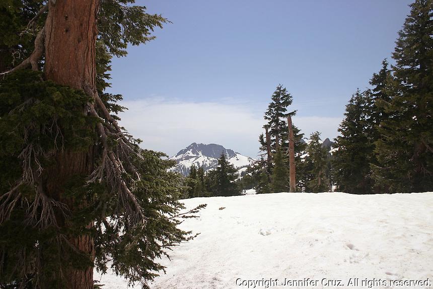 Tree framing the snow at Lassen Volcanic National Park
