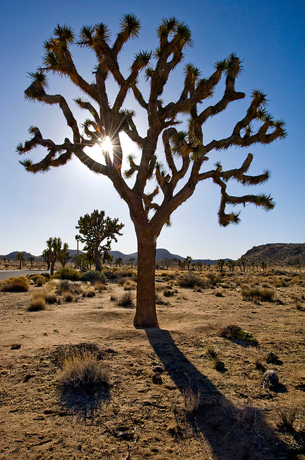 Desert landscape at Joshua Tree National Monument in California