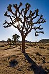 Desert landscape at Joshua Tree National Monument in California