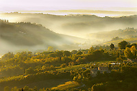 Views across the vineyards and olive groves of the Chianti Region from San Gimignano, Tuscany Italy.