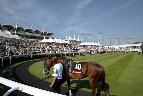 30 July 2004: Horses walking in the Paddock at Goodwood Photo: Glyn Kirk/Action Plus...horse racing 040730 glorious