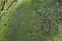 Tehueto petroglyphs carved on a rock in human and animal shapes by a pre-European Marquesian civilisation, in the Tahauku valley, on the island of Hiva Oa, in the Marquesas Islands, French Polynesia. Picture by Manuel Cohen