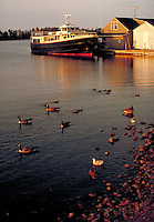 Ferry to Isle Royale National Park at dock, boats, ferries, geese, birds. Copper Harbor Michigan USA.