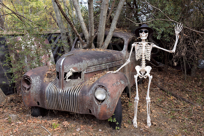 Skeleton waving hello standing by junk car with a tree growing out of it, funny and weird Halloween spook image of the afterlife.