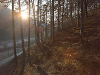 FOREST_LOCATION_90041