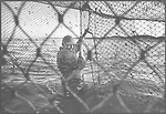 Salmon netter Bob Ritchie repairing netting in the court of a 'jumper' net off the shore at Kinnaber, Angus.<br /> Ref. Catching the Tide 47/00/26a (1st August 2000)<br /> <br /> The once-thriving Scottish salmon netting industry fell into decline in the 1970s and 1980s when the numbers of fish caught reduced due to environmental and economic reasons. In 2016, a three-year ban was imposed by the Scottish Government on the advice of scientists to try to boost dwindling stocks which anglers and conservationists blamed on netsmen.