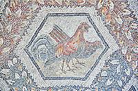 3rd century AD Roman mosaic panel of  two chickens  from Thugga, Tunisia.  The Bardo Museum, Tunis, Tunisia.