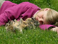 Zwergkaninchen, Zwerg-Kaninchen, Mädchen spielt mit Jungtieren auf dem Rasen im Garten, dwarf rabbit