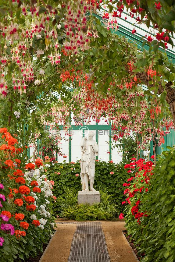 Belgique, Bruxelles, Laeken, le domaine royale du château de Laeken, les serres de Laeken durant la période d'ouverture au public au printemps, longue serre galerie et fuchsias // Belgique, Bruxelles, Laeken, the royal castle domain, the greenhouses of Laeken in spring. Long greenhouses with large Fuchsia.