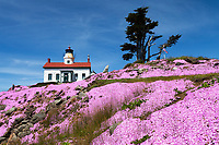 Flowers bloom at the Battery Point Lighthouse which sits outside the Crescent City harbor along the Northern california coast. On December 10, 1856 the lighthouses original fourth order Fresnal lens first illuminated the night sky an remained active until the lighthouse was automated in 1953 and its original lens replaced by a modern 375 mm lens. Access to the onsite museum and lighthouse is accessible only at low tide across an exposed land bridge.