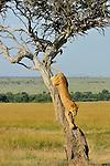 Africa - Big Cats
