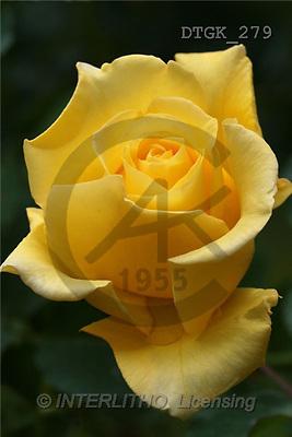 Gisela, FLOWERS, photos(DTGK279,#F#) Blumen, flores, retrato