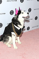 LOS ANGELES - AUG 12: Swaggy Wolfdog at the 5th Annual BeautyCon Festival Los Angeles at the Convention Center on August 12, 2017 in Los Angeles, California