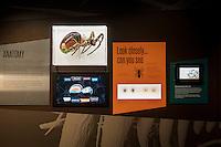 AUSTRALIAN MUSEUM - SPIDERS