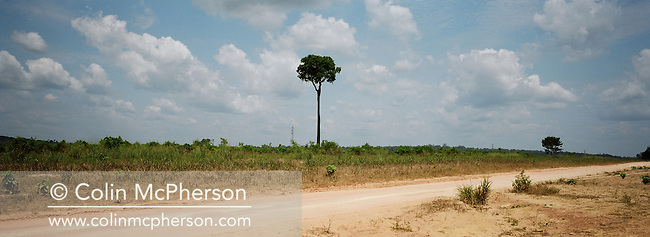 A solitary Brazil nut tree standing by the highway in a cleared patch of rainforest. Highway BR163 ran from Santarem on the banks of the Tapajos river for one thousand miles south into the state of Mato Grosso and was unpaved except for a small stretch at its northern end. The area surrounding the highway was the front line in the battle between local communities and environmentalists who tried to prevent to spread of rainforest destruction by illegal loggers and companies which bought and seized land for use in cattle ranching and growing soy beans for export from Brazil via the port at Santarem.
