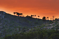 Mountain top at sunset on the Korcula island with pine trees in silhouette on the crest against an orange sky Prizba village. Korcula Island. Prizba, Riva Apartments, Danny Franulovic. Korcula Island. Dalmatian Coast, Croatia, Europe.