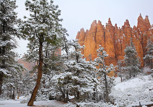 A LIGHT SNOW FALLS INTO THE BOTTOM OF BRYCE CANYON AT BRYCE CANYON NATIONAL PARK, UTAH