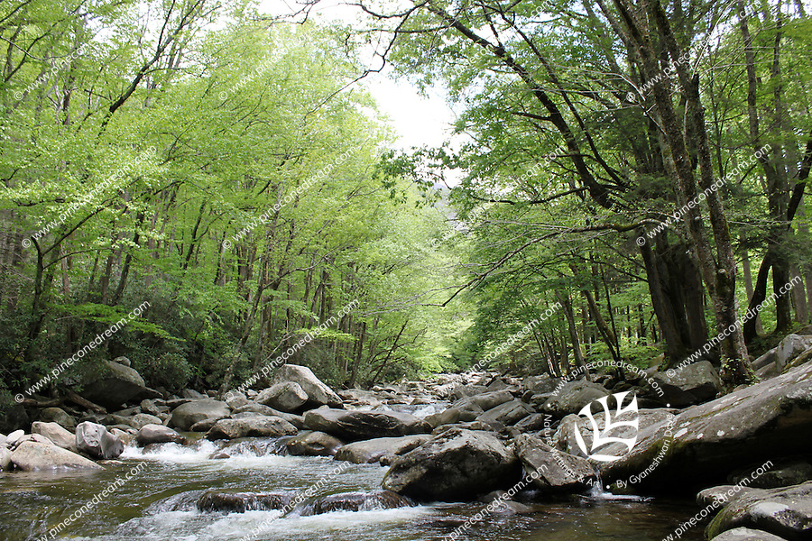 Stock image of beautiful river stream flowing through the great smoky mountain national park.