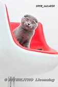 Xavier, ANIMALS, REALISTISCHE TIERE, ANIMALES REALISTICOS, cats, photos+++++,SPCHCATS858,#a#