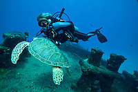 The Suffolk Maid tug boat, Butler Bay, <br /> St. Croix, USVI  <br /> Dive master Shannon Johnson with a green sea turtle