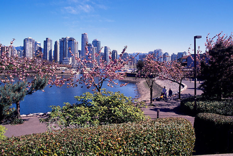 "Vancouver City Skyline, Downtown at Yaletown and ""False Creek"", BC, British Columbia, Canada, Spring"
