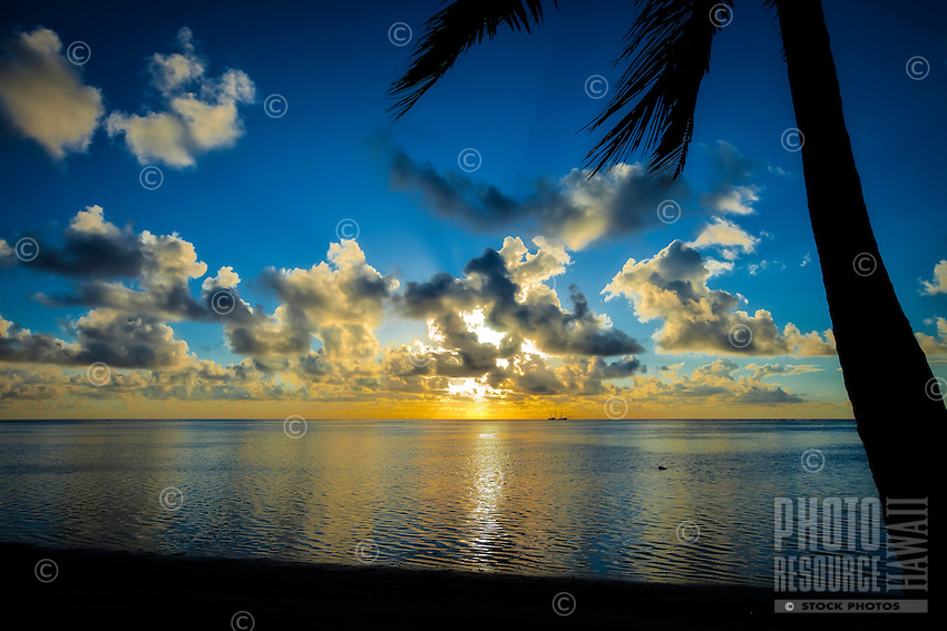A palm tree silhouetted at sunset with a Dawn Treader on the distant horizon, Amuri beach, Aitutaki Island, Cook Islands.