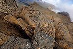 Crumbling dolerite columns define most of the Overland's shadowing peaks. top target for mot walkers is 1617 m Mt Ossa, Tasmania's highest point which is accessible in fair weather via a steep side-track....Sommet du  Mont Ossa (1617 m) point culminant de la Tasmanie. colonnes de dolérites, c'est l'un des liens géologiques entre la Tasmanie et l'Antarctique, une roche formée il y a170 millions d'années quand le supercontinent Gondwana a commencé à se fracturer.....