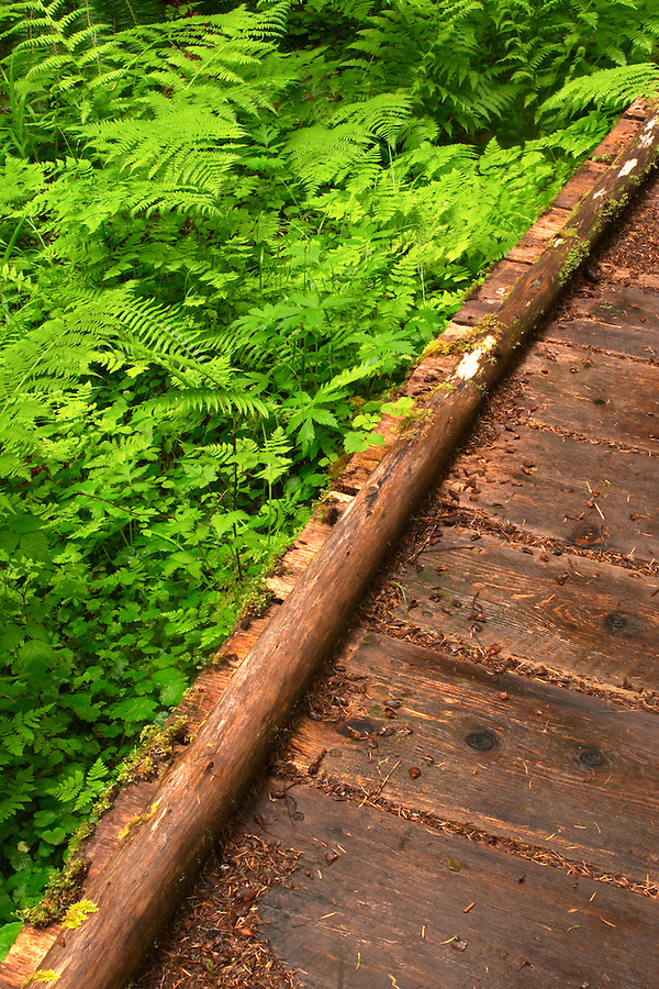 Boardwalk trail through old growth temperate rain forest, Soleduck River Valley, Olympic National Park, Olympic Peninsula, Clallam County, Washington, USA
