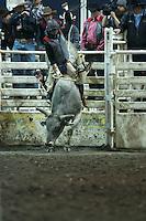 2014 MSU Rodeo
