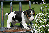 Bob, ANIMALS, REALISTISCHE TIERE, ANIMALES REALISTICOS, dogs, photos+++++,GBLA4347,#a#, EVERYDAY