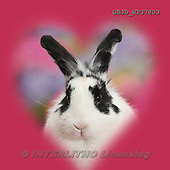 Kim, ANIMALS, REALISTISCHE TIERE, ANIMALES REALISTICOS, photos,+Black-and-white rabbit, Bandit, with soft heart surround. [],++++,GBJBWP37803,#A# ,funny