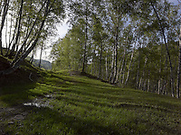 FOREST_LOCATION_90053