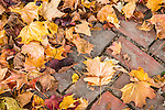 Fall foliage in Hollis, New Hampshire, USA