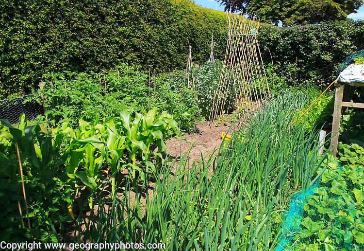 Vegetable plot garden open day at Orford, Suffolk, England, UK