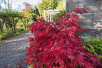 Autumn colours at Kirk House, Chipping, Lancashire.