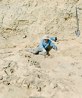 Lead scientist, professor and paleontologist at the University of Manchester in England Phillip L. Manning at the Jurassic Mile dinosaur dig site in the Big Horn Basin in Wyoming, June 29 - July 2, 2019. Manning leads the dig.<br />  <br /> Photo by Matt Nager