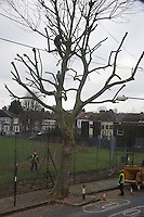 Tree surgeons working on tree in residential street, Abbey Wood, London, UK