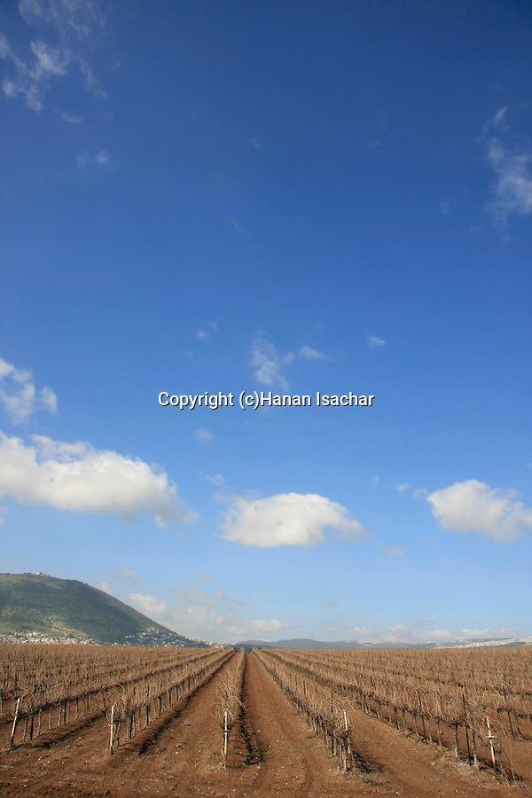 Israel, Jezreel valley. Mount Tabor as seen from road 767