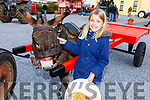 Mya McCormack (Camp) and Donkey George at the Threshing Festival in Blennerville on Sunday.