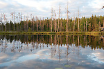 Small Lake in late evening light, Kuhmo, Finland, Lentiira, Vartius near Russian Border
