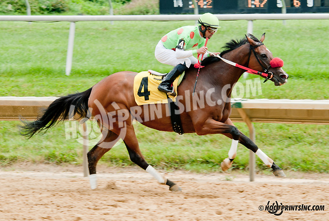 Malibu Murmur winning at Delaware Park on 7/25/13