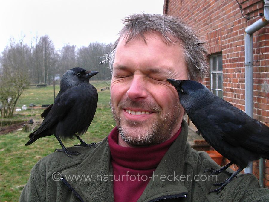 Dohle, zutrauliches Tier auf den Schultern eines Mannes, Corvus monedula, Jackdaw, Choucas des tours